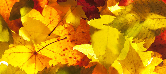 autumn leaves close up background