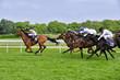 Fototapeten,sport,gewinner,laufen,pferd