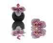 Composition zen avec orchidée et reflet
