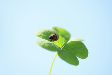 三つ葉と天道虫