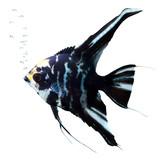 Fototapeta akwarium - wodnych - Ryba