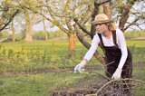 Fototapety Young woman cleaning tree limbs