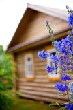wooden country house with front garden. small GRIP poster