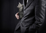 businessman in grey suit and striped kitten in his hands. Ñlose- poster