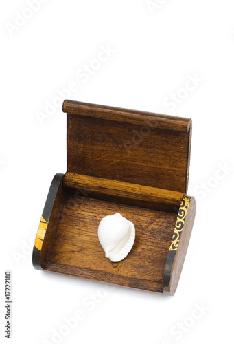 white seashell in the wooden box