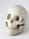 Medical anatomical Skull poster