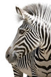Quadro Zebra 001