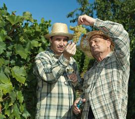 Vintners examining grapes