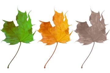 Three leaves symbolizing birth, life and death