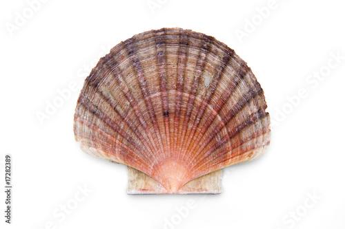 Leinwanddruck Bild Pectinidae
