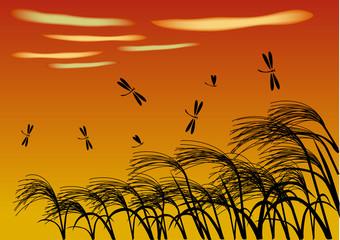 秋 夕焼けに蜻蛉