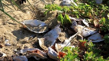 coquilles d'huitres sur la plage de l'Aiguillon