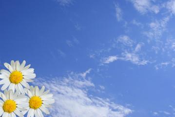 daisywheel on background sky