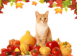 fluffy autumn cat poster