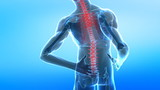 Spread pain in human spine poster