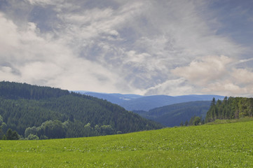 Im Schwarzwald