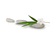 wellness still life, blades of bamboo and jasmine flower with pe