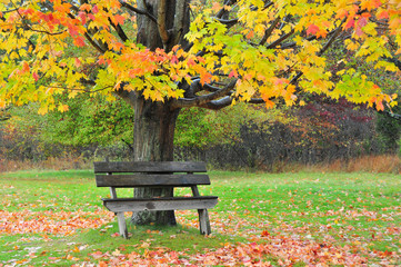 Antique Wooden bench under Autumn Trees