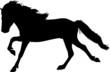 Gallop - Icelandic Horse