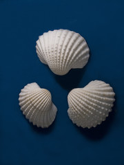 Three White Seashells