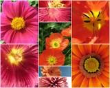 pollen poster