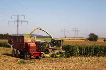 Chopping Corn for Silage 07