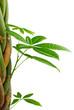 image d'un décor nature vert, bordure isolée sur fond blanc