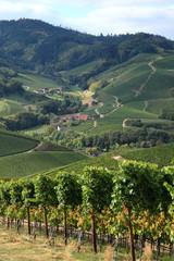 paysage avec des vignes