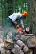 Lumberjack with protective clothing