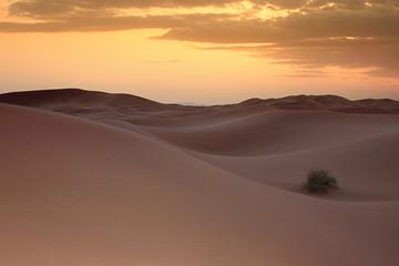Il Sahara al tramonto