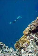 Freediver and coral sea