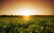 Sunset Crop