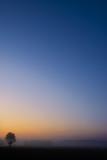 Single tree with vibrant blue orange sunrise sky poster