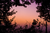 Plants framing vibrant pink sunrise poster