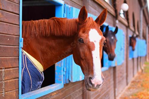 Staande foto Paardrijden Pferdestall