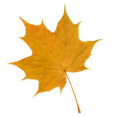 Herbst, Ahornblatt