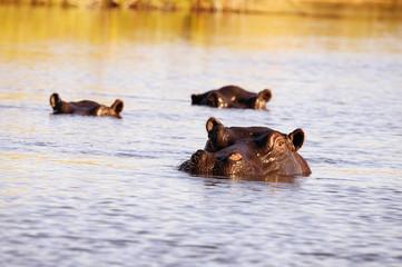 La piscina degli ippopotami