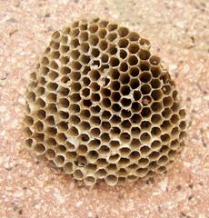 nido d'ape