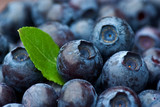 Fototapety Blueberries