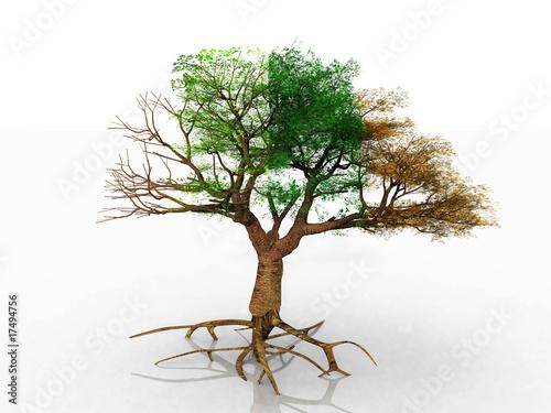 Staande foto Kameleon l'arbre saisons