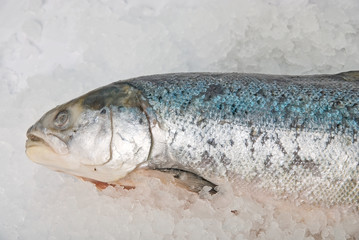 fresh bright trout fish