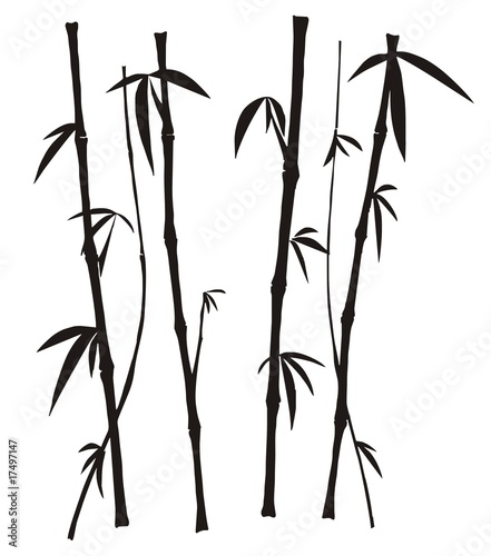 Bamboo over white background