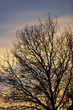 Autumn or early winter sunset - tree