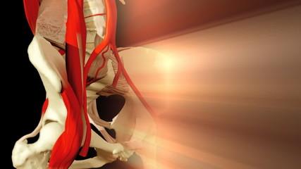 3D animation illustrating the human anatomy