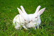 two rabbits on the grass