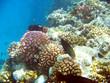 Leinwanddruck Bild - Récif de coraux