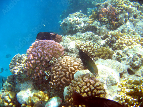 Leinwanddruck Bild Récif de coraux