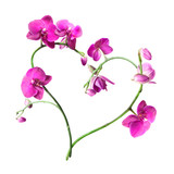 Fototapety heart from pink orchids isolated on white