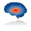Picto du système verveux : le cerveau