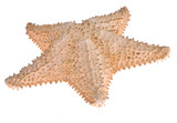 uneven isolated starfish poster